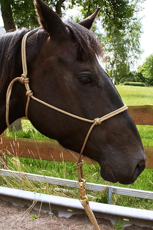 Horse-Man-Halfter