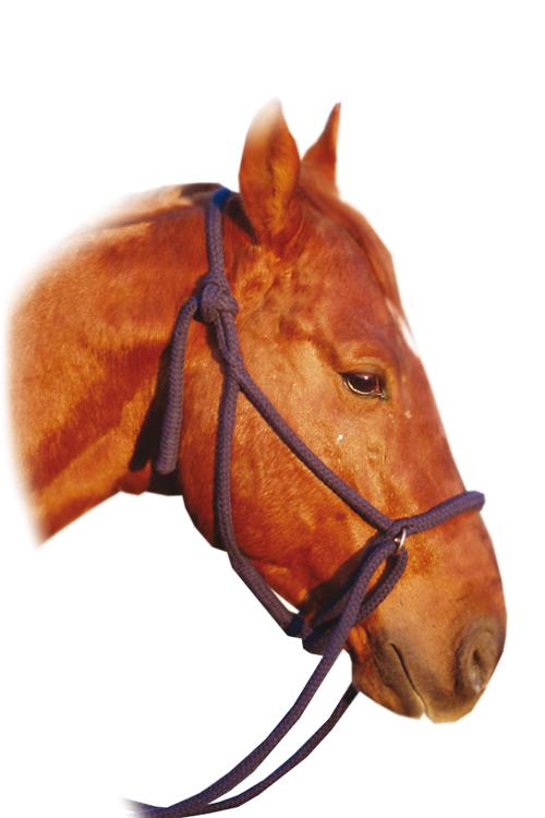 Reithalfter Baumwolle Zügel - Ansicht Pferd