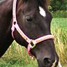 Halfter Swarovski - Ansicht Pferd