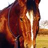 Halsring Baumwolle - Ansicht Pferd