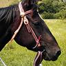 Ansicht Pferd