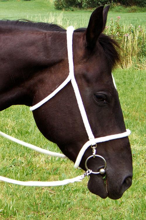 Wanderreithalfter Baumwolle Zügel - Ansicht Pferd